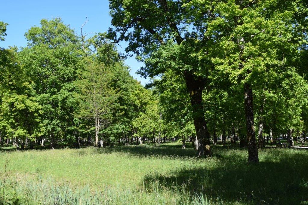 Bois du Broustic