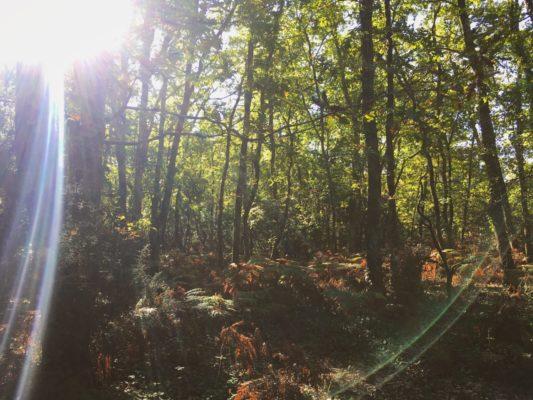 Les Quinconces en automne