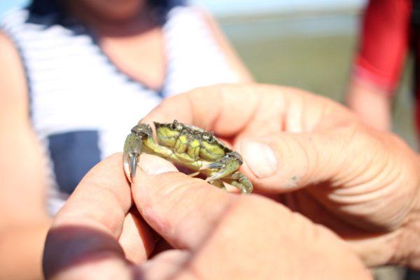Pêche à pied et au crabe