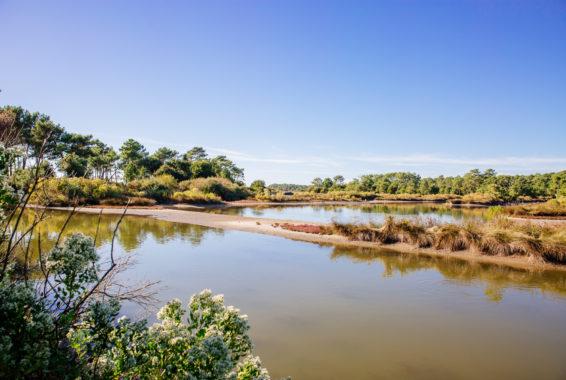 Le site naturel protégé des Quinconces Saint Brice et le Coulin